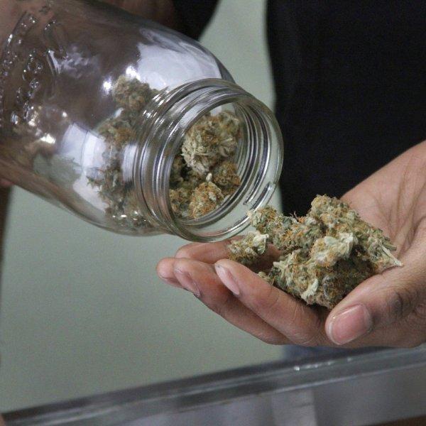 Picture of medical marijuana