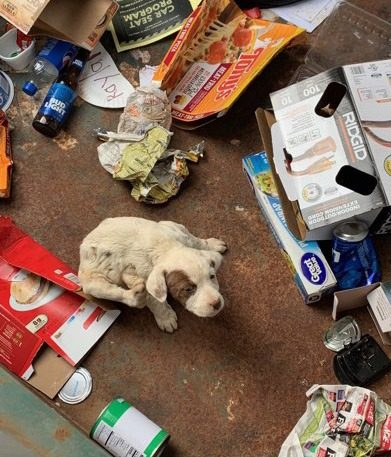 photo of a puppy in a dumpster