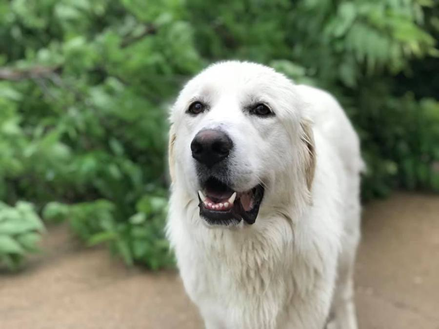 Picture of missing dog