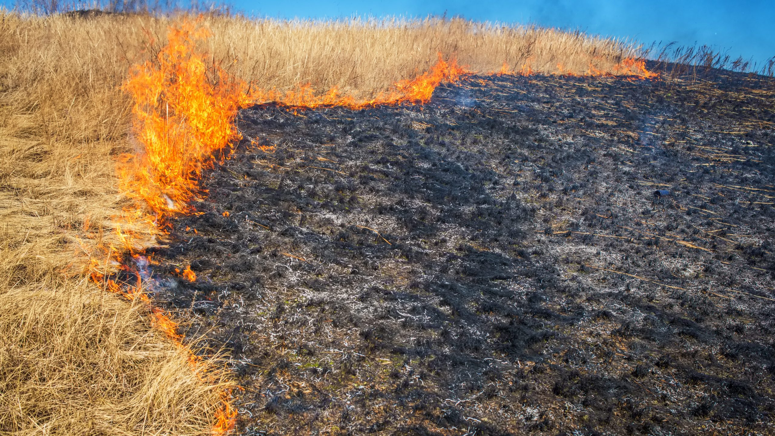 Grass fire picture