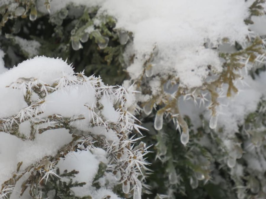 Picture of rime ice