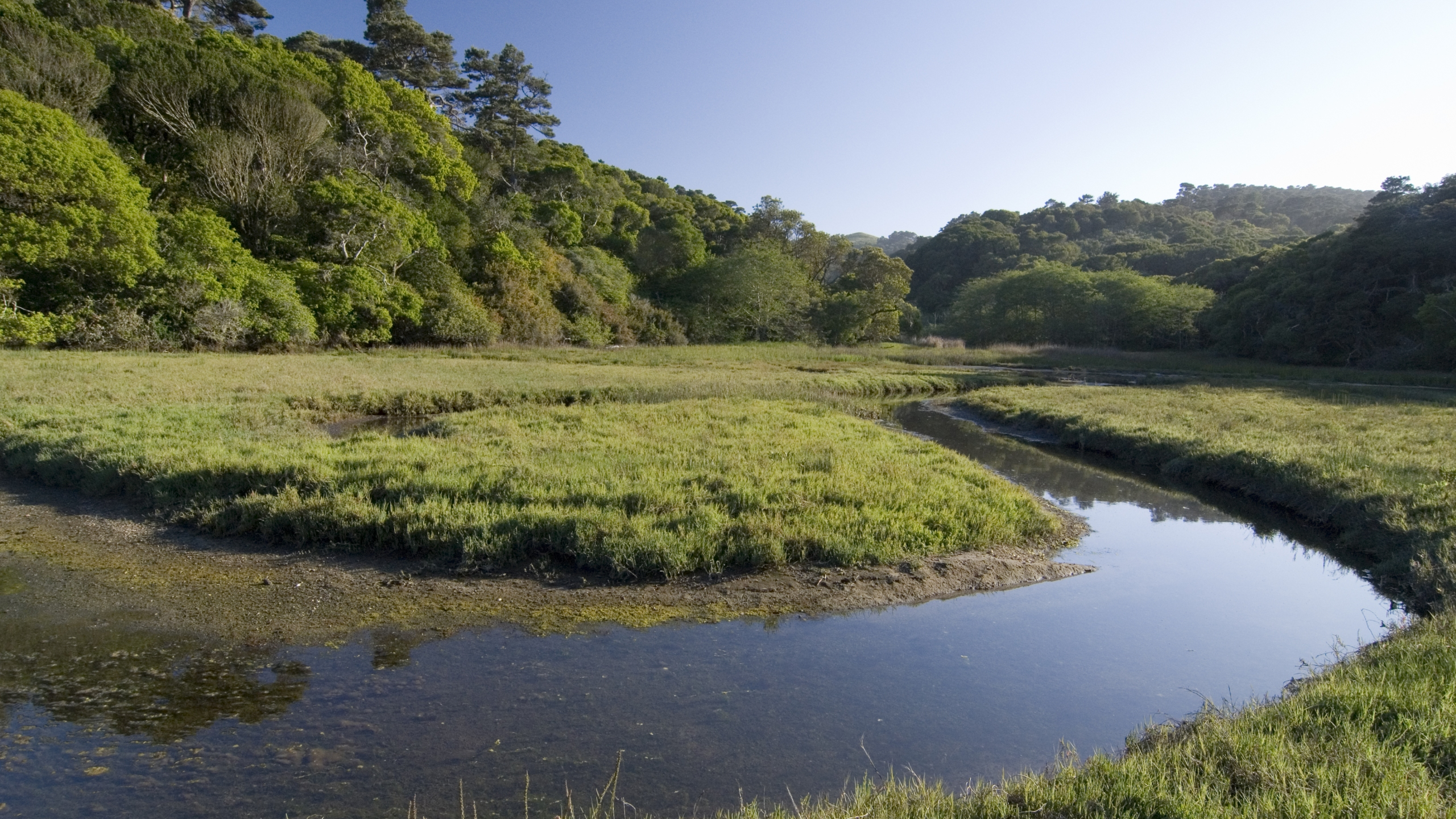 Picture of Tomales Bay State Park