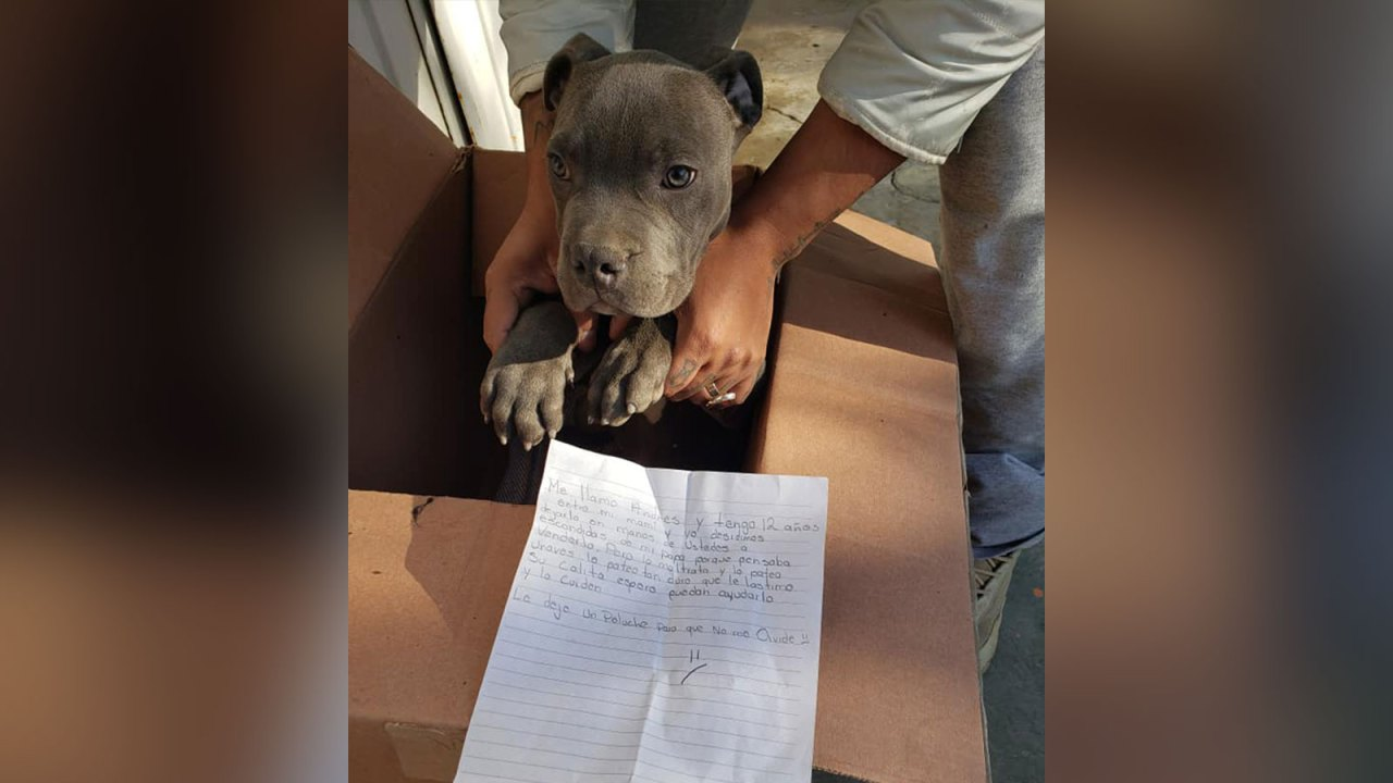 Boy leaves puppy at shelter with heartbreaking note describing father's abuse