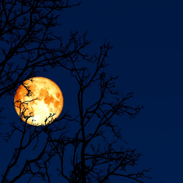 Picture of a full moon