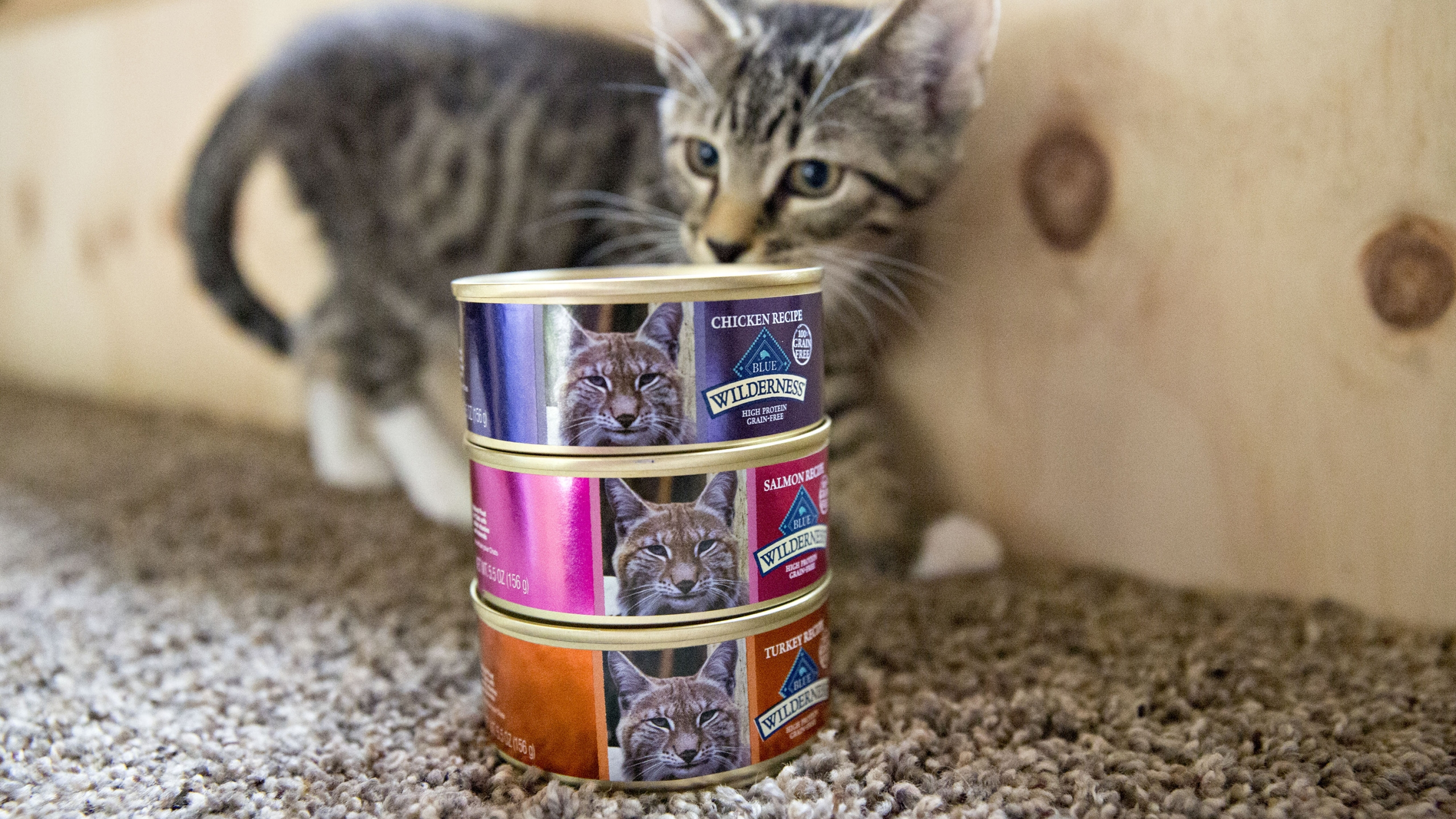 Picture of cat next to pet food