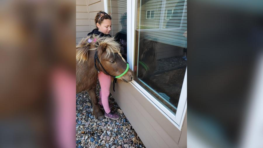 Picture of little girl with her pony