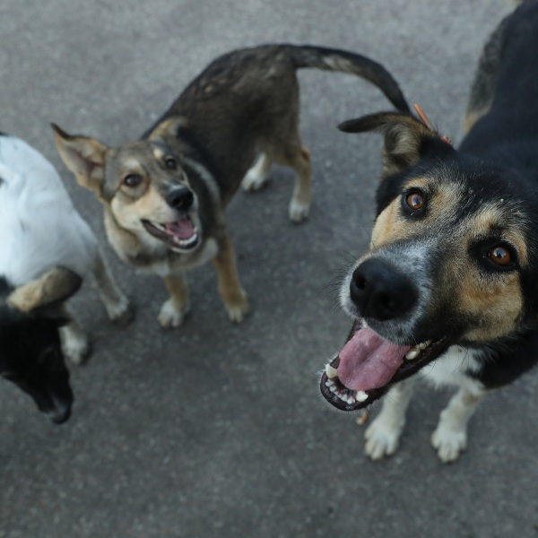 Picture of dogs looking up smiling
