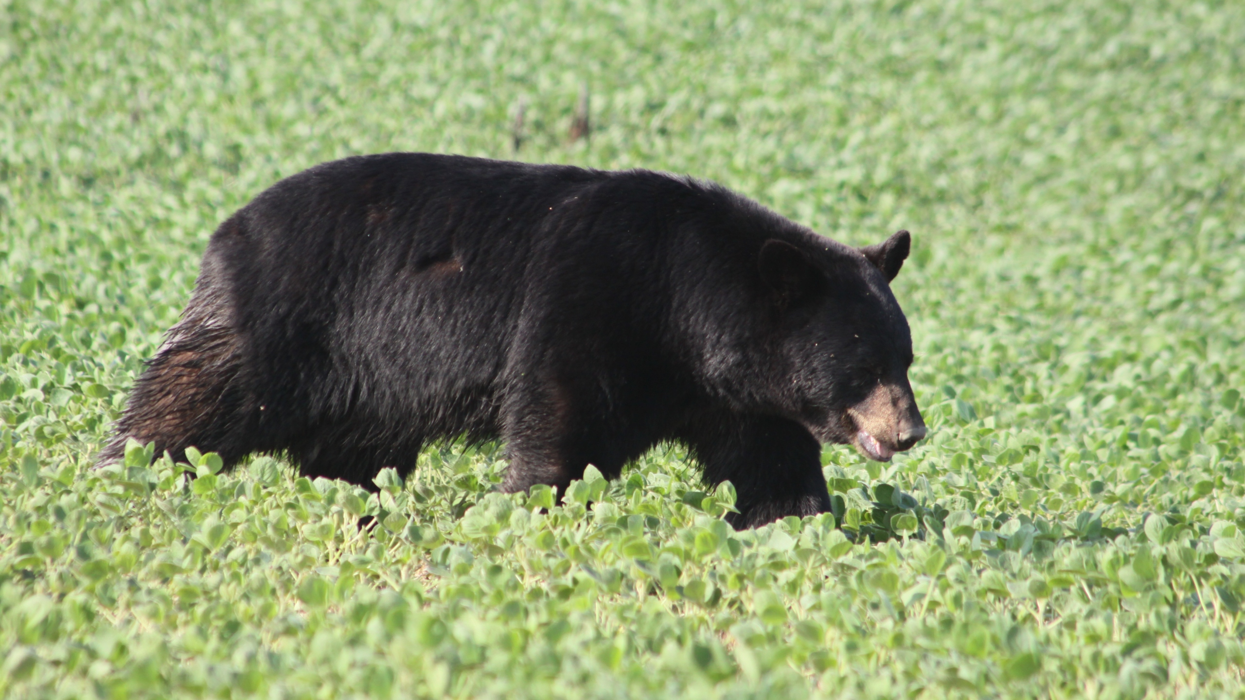 Picture of Bruno the bear