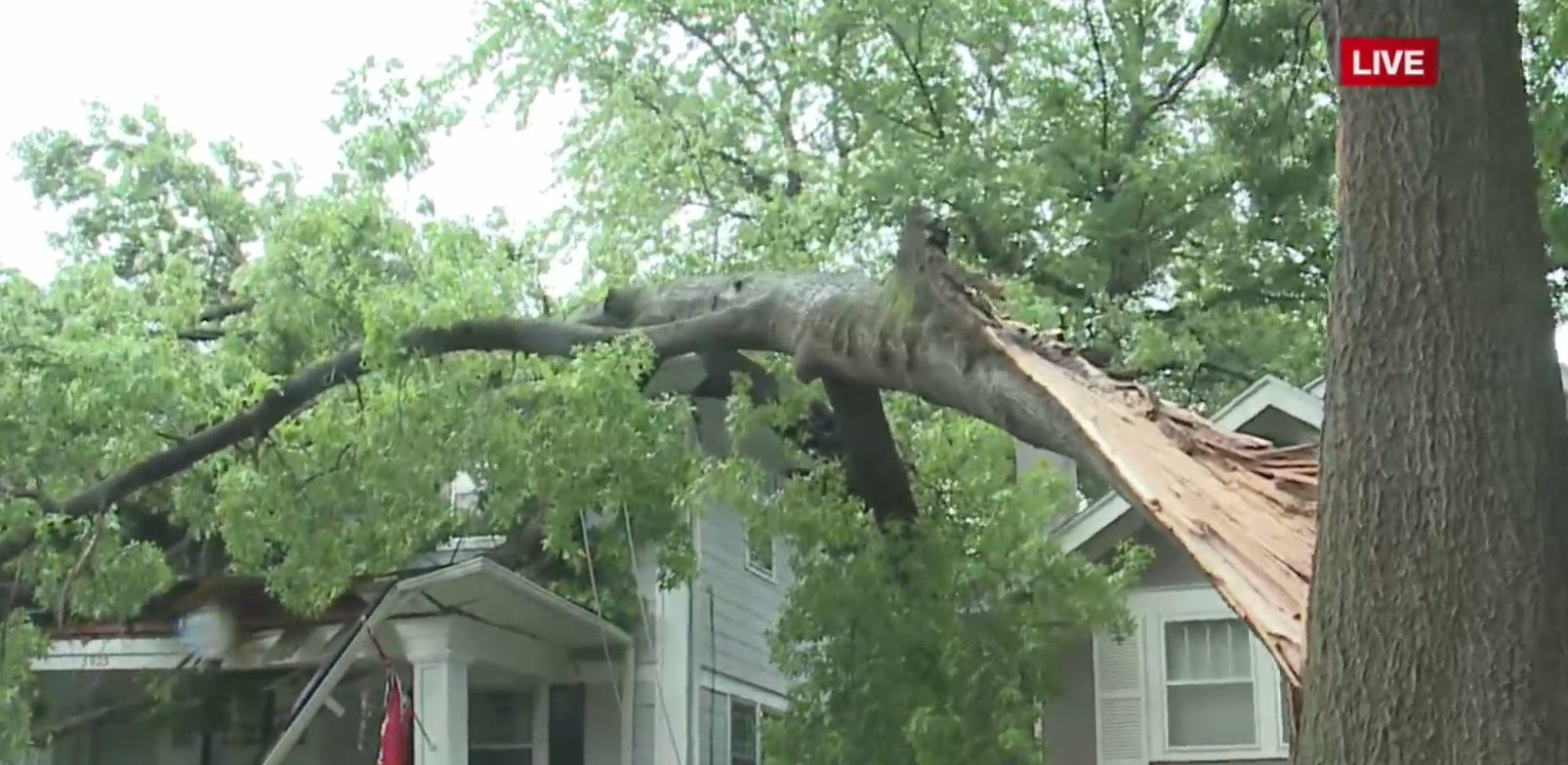 Picture of a tree laying on a house