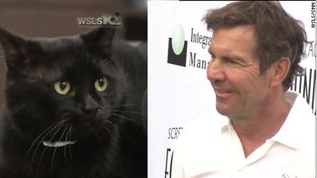 Dennis Quaid the cat (left) and Dennis Quaid the actor