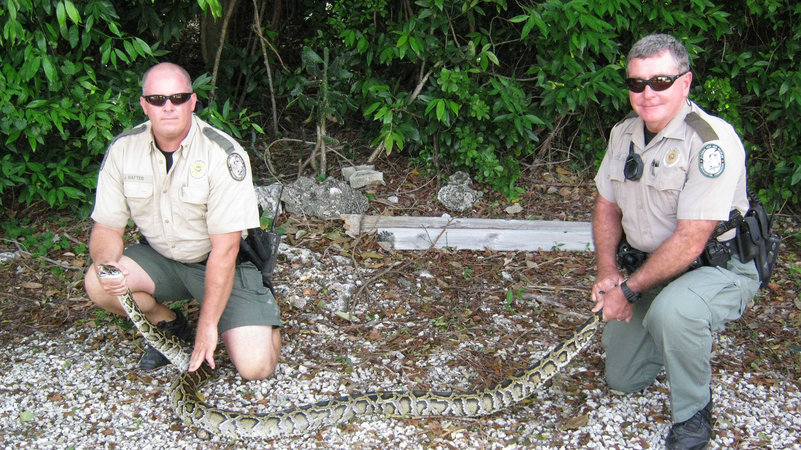 Picture of wildlife officials holding python