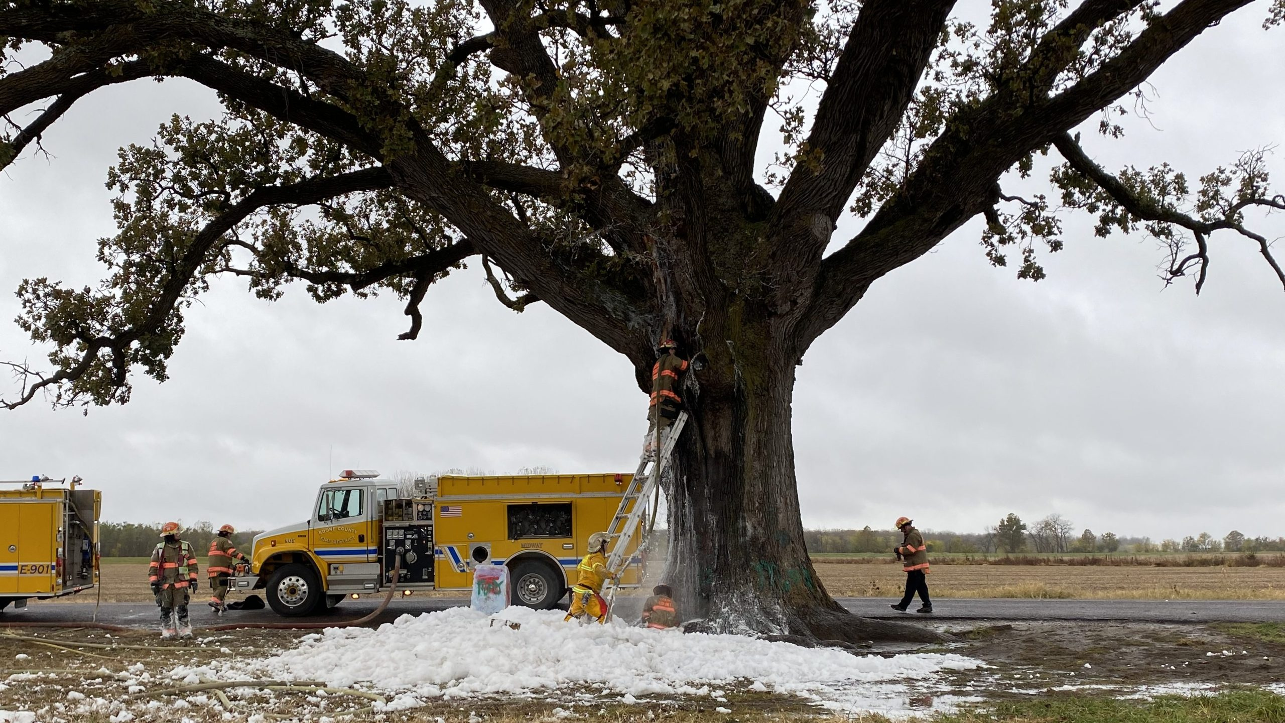 Picture of McBaine Bur Oak with scorch marks