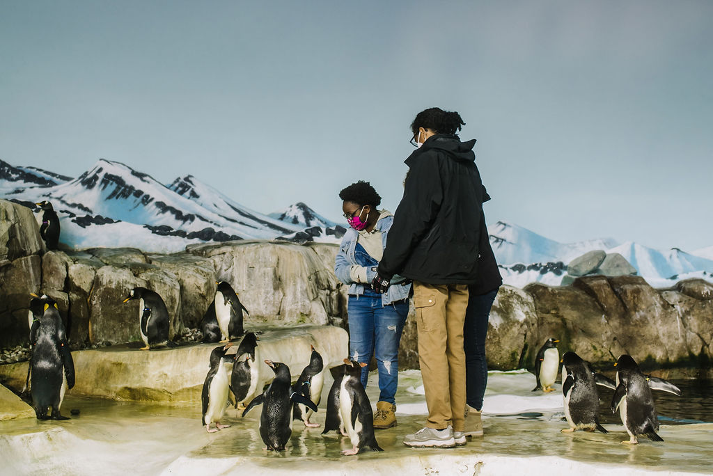 Picture of Thursday's Child with penguins