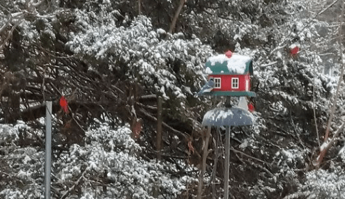 Picture of snow and birds at a feeder
