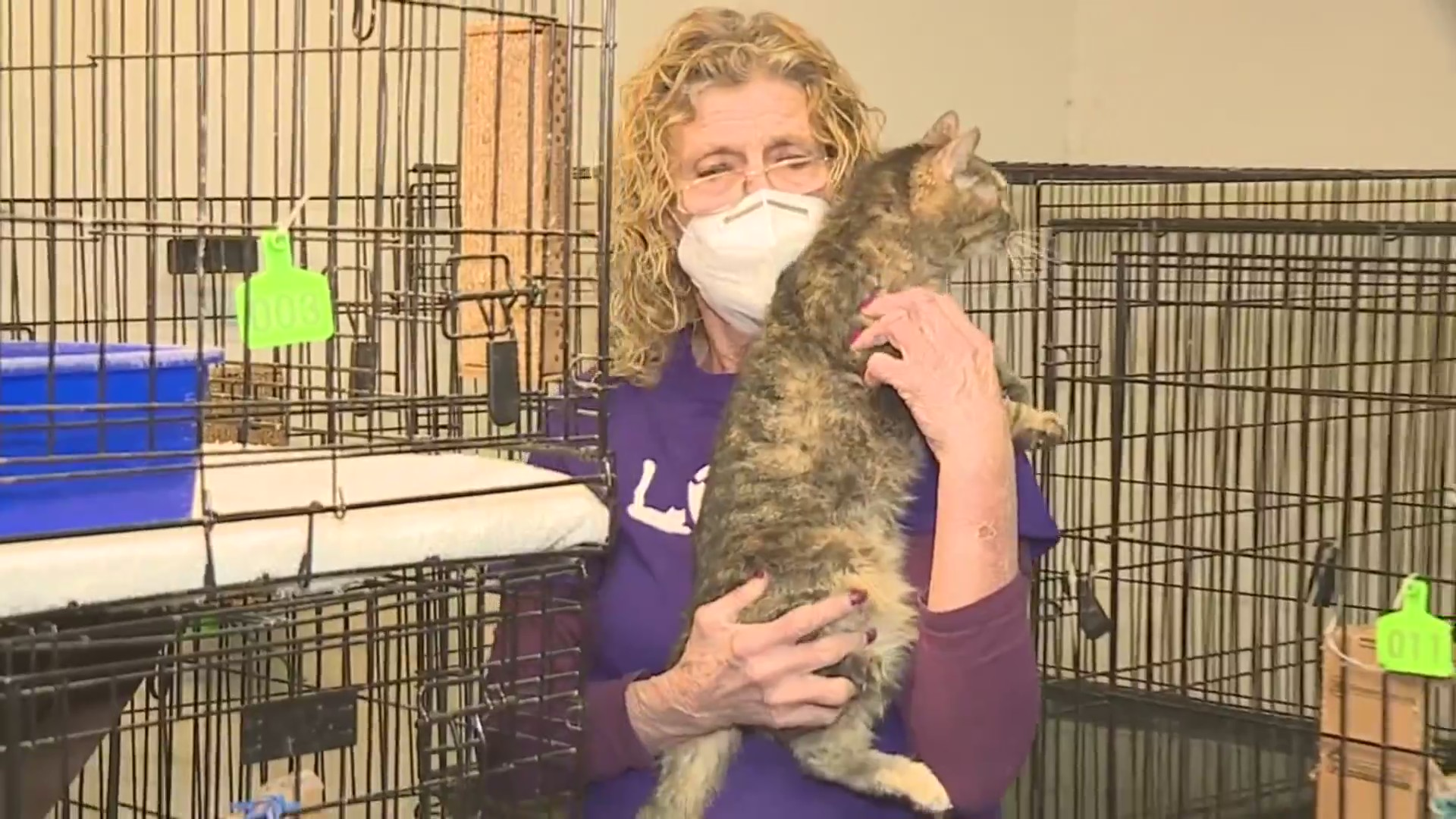 Picture of woman holding rescued cat near cages