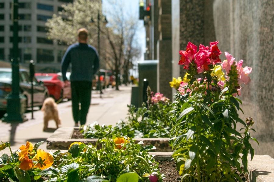 Picture of flowers and man walking dog near Baltimore and 9th.