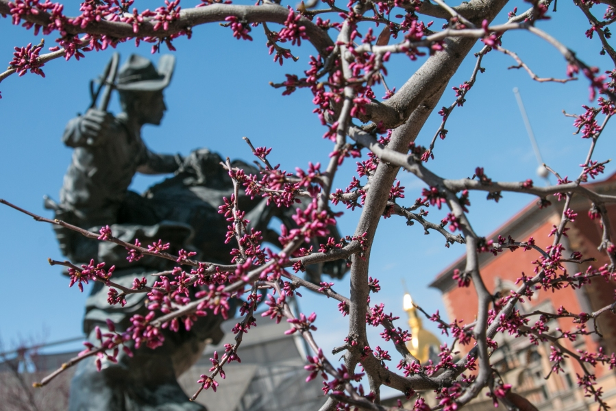 """Picture of budding tree and """"Bronco Buster"""" statue at Barney Allis Plaza"""
