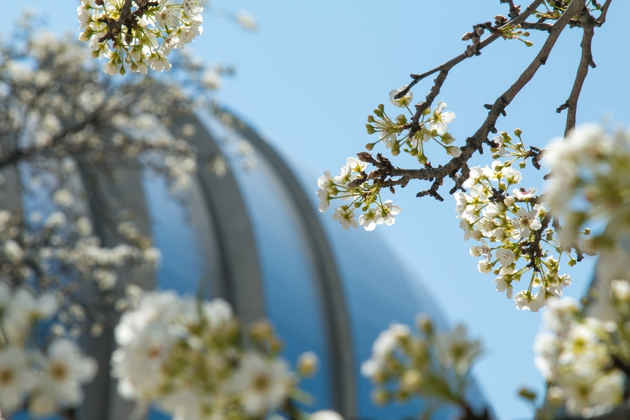 Picture of Hawthorn flowers outside of the Kauffman Center.