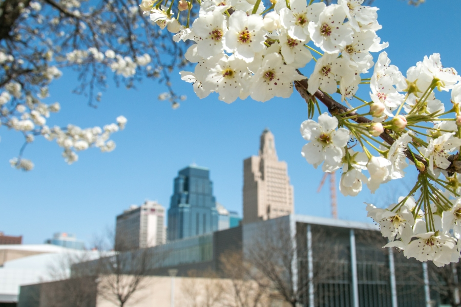 Picture of Hawthorn flowers and the Kansas City skyline.