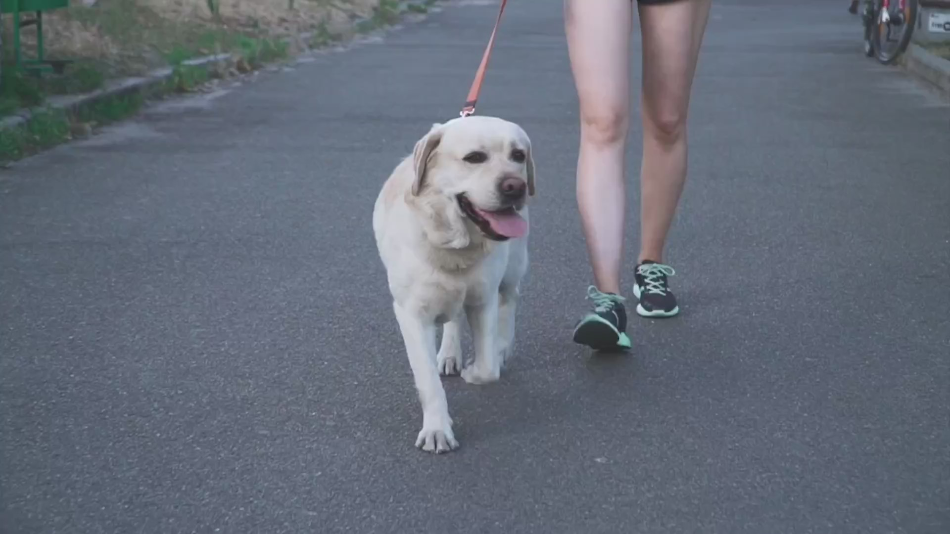 Picture of dog going for a walk