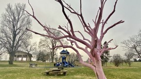 Picture of pink tree at Swope