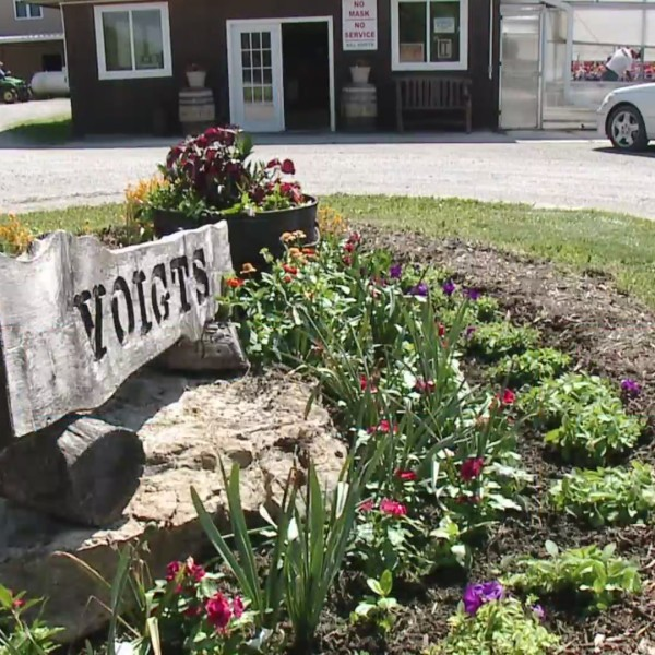 Picture of Voigts sign
