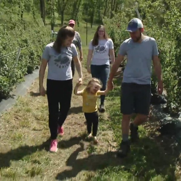Picture of family walking among blackberries